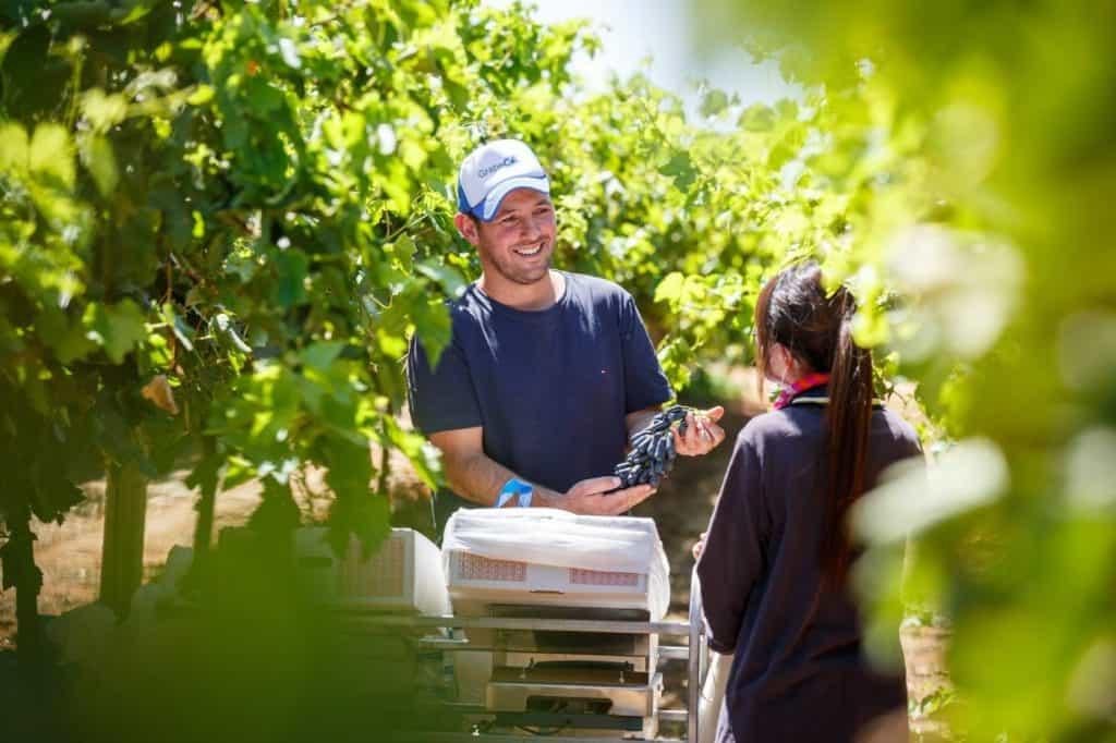 Australian Table Grape Association